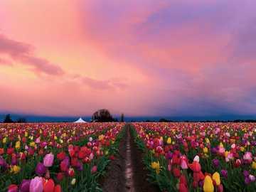 campo di fiori al tramonto - Wow! guarda quanti fiori!