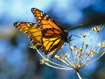 Motylki... - Motylki...............
