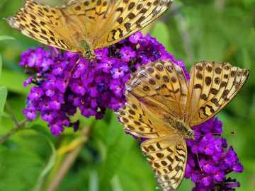 Motylki... - Motylki..................