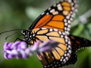 Motylki... - Motylki.................