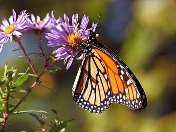 Pillangók ... - Pillangók ...................