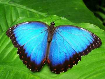 Pillangók ... - Pillangók ..................
