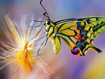 Papillons ... - Papillons ..................