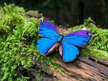 Papillons ... - Papillons ....................