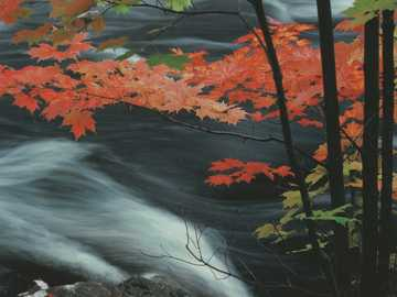 Bach in autumn - Rapid stream in autumn