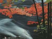 Bach ősszel