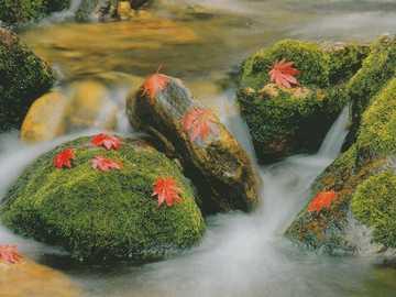 Bacha omszałe kamienie jesienne liście - Bacha omszałe kamienie jesienne liście
