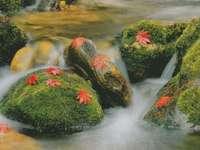 Folhas de outono de pedras musgosas de bach