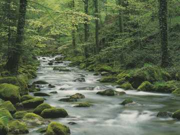 A calmly flowing forest stream - A calmly flowing forest stream