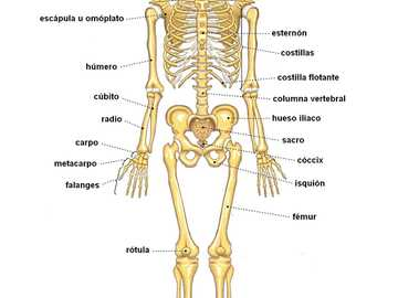 SKELETAL SYSTEM - PARTS OF THE OSEO SYSTEM