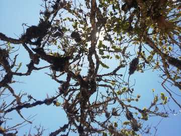 Tree in the mountains of Peru - Ayabaca, Peruvian highlands
