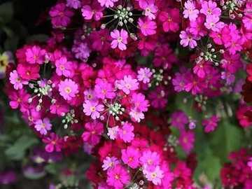 różowe kwiaty - różowe kwiaty - piękno natury