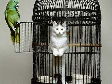 Funny cats - Funny cats..............