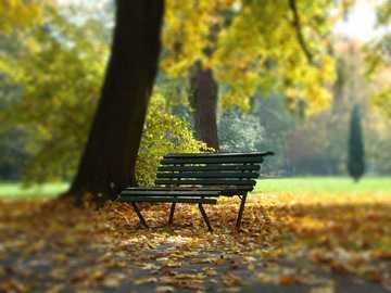 Autumn nostalgia - Krakow park in gold colors