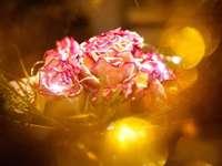 Rosenstrauß v Pink-Weiß.