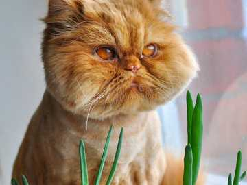 Funny cats - Funny cats............
