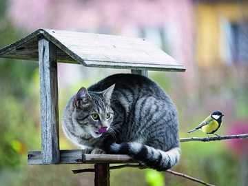 Funny cats - Funny cats.............
