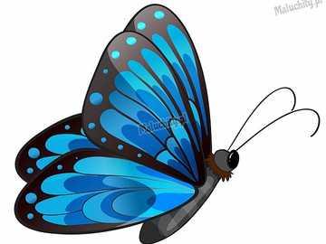 NIEBIESKI MOTYL - niebieski motyl - piękno natury