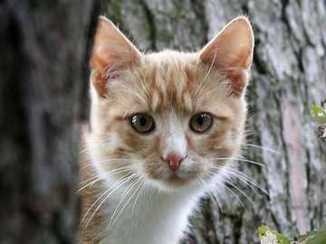 Śmieszne koty - Śmieszne koty..............
