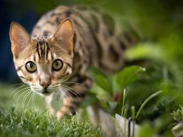 Lustige Katzen - Lustige Katzen..............
