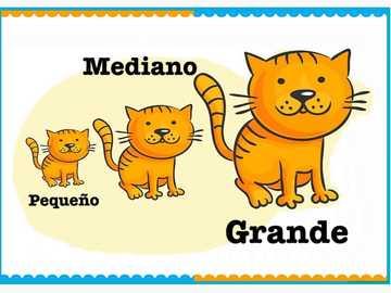 pequeño mediano y grande - gatos pequeño mediano y grande