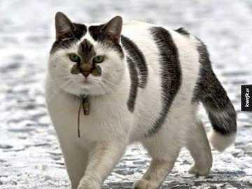 Śmieszne koty - Śmieszne koty.............