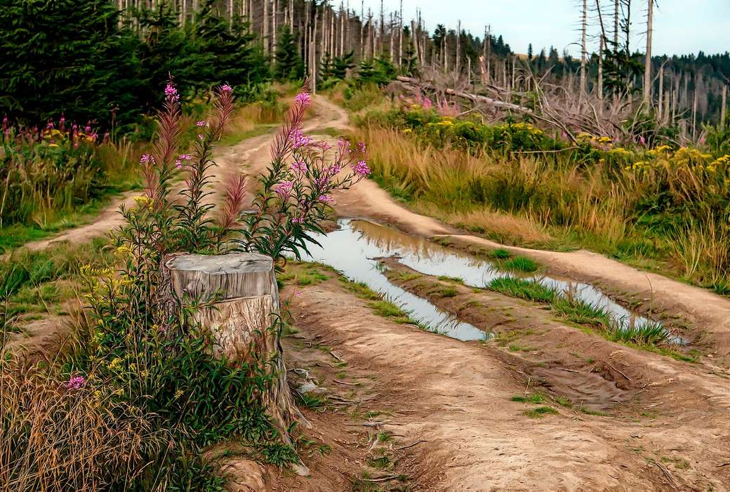 mountain panorama - road - mountains - forest - flowers