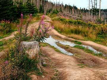 panorama de montaña - camino - montañas - bosque - flores