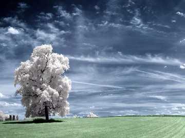 Einsamer weißer Baum - Einsamer weißer Baum