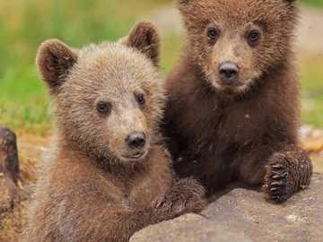we are ready for a photo - we are ready for a photo - little bears