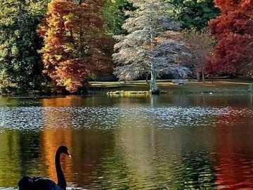 Fall colors. - Landscape puzzle.