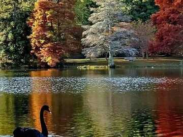 Herbstfarben. - Landschaftspuzzle.