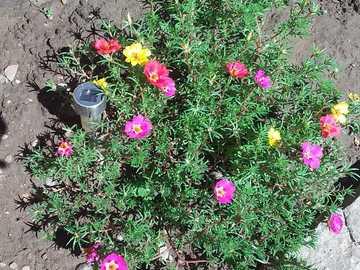 Bonjour! - Les fleurs de nos matins d'été.