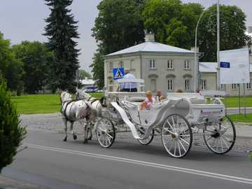 Cab.. - A carriage in Zamość in summer 2016.