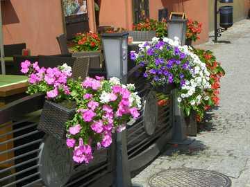 Nice flowers - Nice flowers in Lublin ...