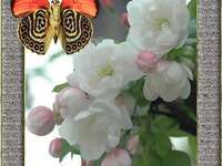 FLOWERS AND BUTTERFLY ...
