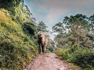 brown elephant walking at middle of walkway beside tree - Elephant Nature Park, some 40 miles from Chiang Mai, has been rescuing and rehabilitating pachyderms