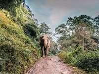 slon hnědý chůzi uprostřed chodníku vedle stromu