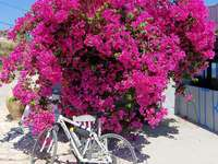 bike tour in greece - bike tour in greece