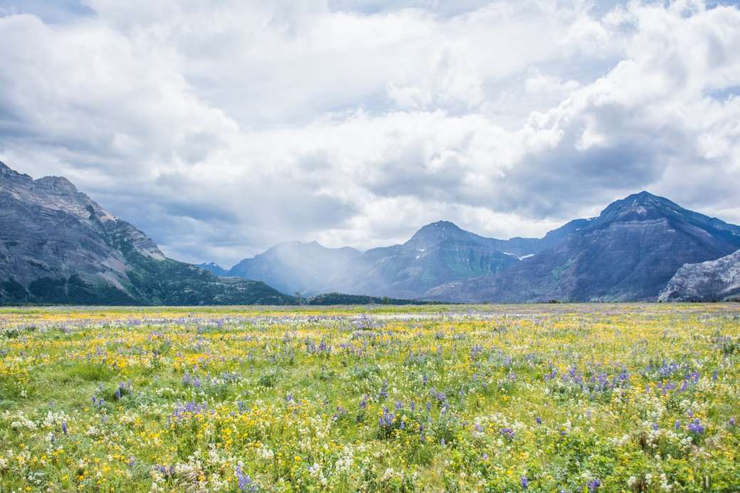 Campos de flores silvestres - campo de flores amarillas cerca de la montaña bajo nubes blancas durante el día. Waterton, AB, Can