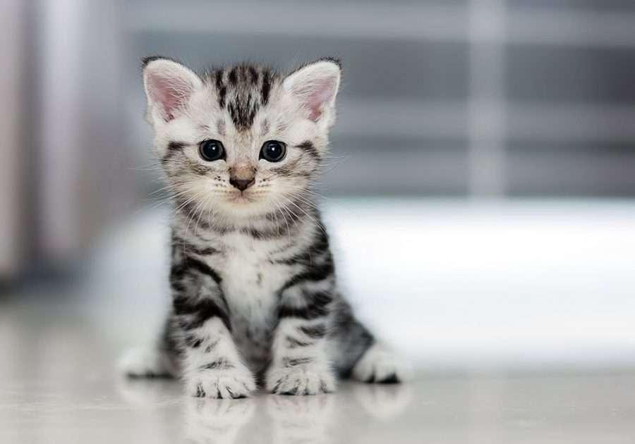 Gestoken kat - de foto toont een kat (3×2)