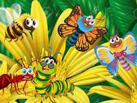 Insecte Fluturasi