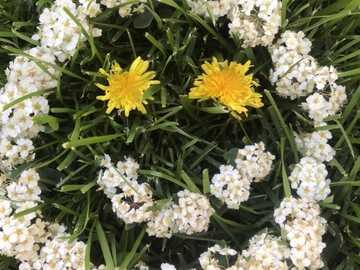 Flori Emotii - In aceasta imagine este reprezentata emotia fericirea