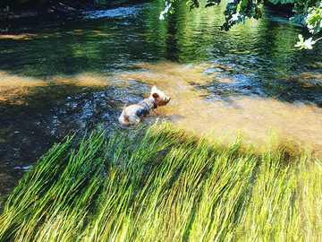 Día de perros - Refrescarse en el calor del verano