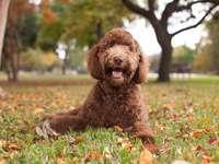 Pequeno cachorro..... - Pequeno cachorro.....................