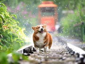 Μικρό σκυλί..... - Μικρό σκυλί.......................
