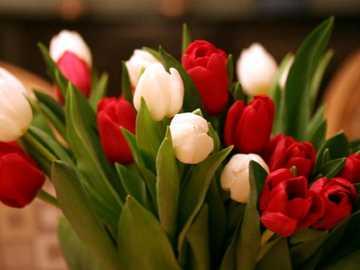 Lalele, lalele - Dans aceasta imaginez sunt reprezentate niste flori de primavara. Foarte frumoase si gingase, soin i