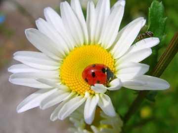 Insecto - En această imagine se reflectă insectele.