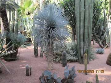 Marrakech garden - Lovingly landscaped garden in Marrakech