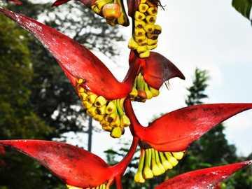 Banana flower - Beautiful banana flower